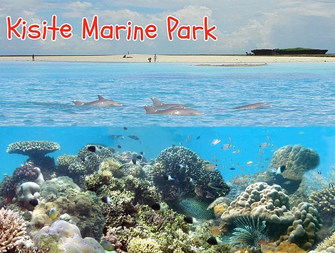 Enjoy a Charlie Claw's tour of Kisite Marine Park