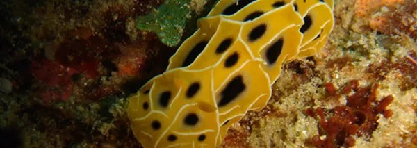 scuba-diving-slide2