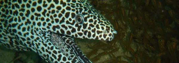 scuba-diving-slide5